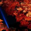 紅葉の秋、コウヨウの秋、モミジの秋 in Kyoto