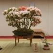 平成30年度 春の文協まつり 「盆栽・皐月展」&「水石展」
