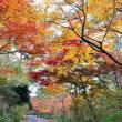 秋色2017 ふたたび紅葉の修法ヶ原。