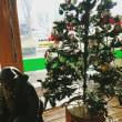 道の駅のクリスマス☆