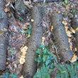 秋は赤色。ニホンアカガエル、ドウダンツツジ。