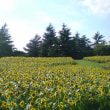 真夏の光景