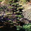 『春の便り』 蓮花院