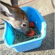 鹿は、熟した柿が好きだとかーー犬猫みなしご救援隊から