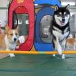 """昨日の【ALOHA塾】は""""チョークアートぷちレッスン""""でした!  犬のしつけ教室@アロハドギー"""