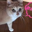 猫とおしゃべり『お母ぁ~ん😺』『はいよぉ~👩』