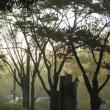 朝霧の県立三木山森林公園