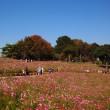 昭和記念公園の今は・・・