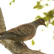 モエレの野鳥たち 9/20 ノビタとノビ子 カワセミはまだ居ますが・・・