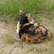 複雑模様三毛猫…多摩川猫シリーズ