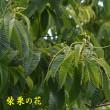 2018/05/21 ジャガイモ収穫