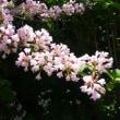 京都府立植物園のストックから・・・