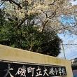 『桜便り』 小学校