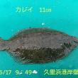 笑転爺の釣行記 6月17日☁☀ 久里浜カレイ・浦賀