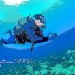 沖縄ダイビングCOOLニュース 2018年 3月17日