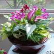 アンスリュームや観葉の室内鉢