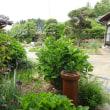 庭の様子③