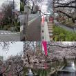 東京の桜名所巡り
