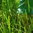 奥の谷の水の生き物池での観察