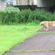 夏休み中の公園散歩