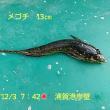 笑転爺の釣行記 12月3日☀ 浦賀港岸壁