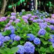 梅雨時の後楽園・植物園・白山・六義園
