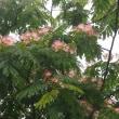 雨のあいまにあの花に会いに