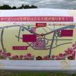 名護 桜祭り