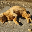公園の猫たち!