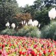 昭和記念公園の続き