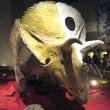トリケラトプス・ホリドゥス