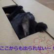 台風18号のため、猫スタッフは屋内作業?中です