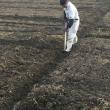 小麦溝の手直し