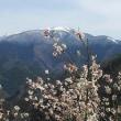 花咲く山里と雪の山