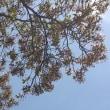 昭島エコ・パークのお花が綺麗です