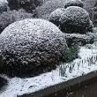 雪ですよ〰