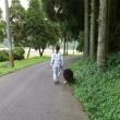 長距離散歩