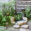 夏の終わりの植物園