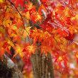 今日はこれから紅葉を見に泉自然公園に行きます。