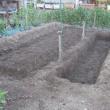 畑土作り・3
