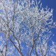 黒檜山は冬仕度