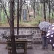 閑話休題79 飛蓬 漢詩を詠む-17 ― 河南省 杜甫故里を訪ねる
