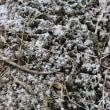 寒い日はアツアツ牡蠣グラタンで