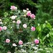 熊山英国庭園 春 2018
