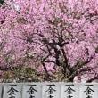 今治市桜井の綱敷天満神社の梅花祭も間近です