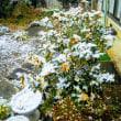 初雪ですか⛄