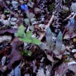 5月に出会った花々  2017年5月 岩湧の森 金剛山