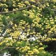 春爛漫 千草園