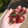 トマトの贈り物「週末のペーパン」