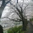 駿府城公園で見る季節の移り
